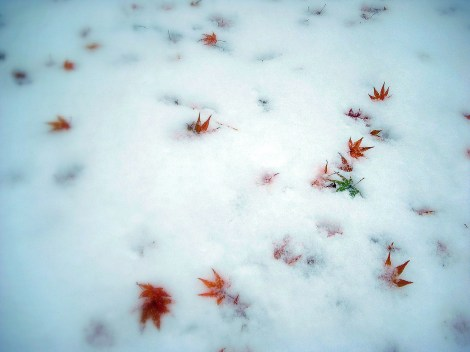 Maple Leaves on Autumn Snow